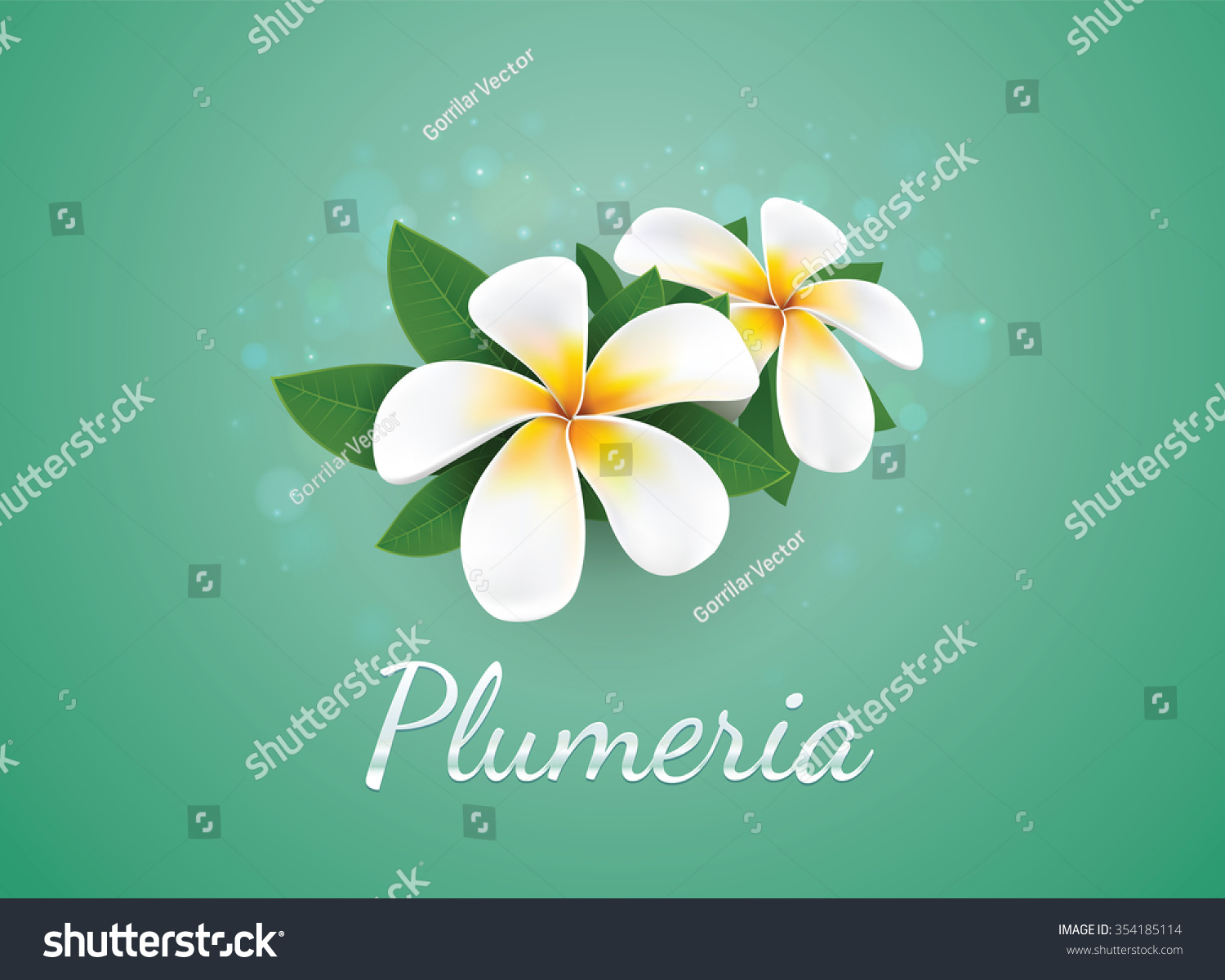 Flower Plumeria Illustration Vector Real Style Stock Vector Royalty