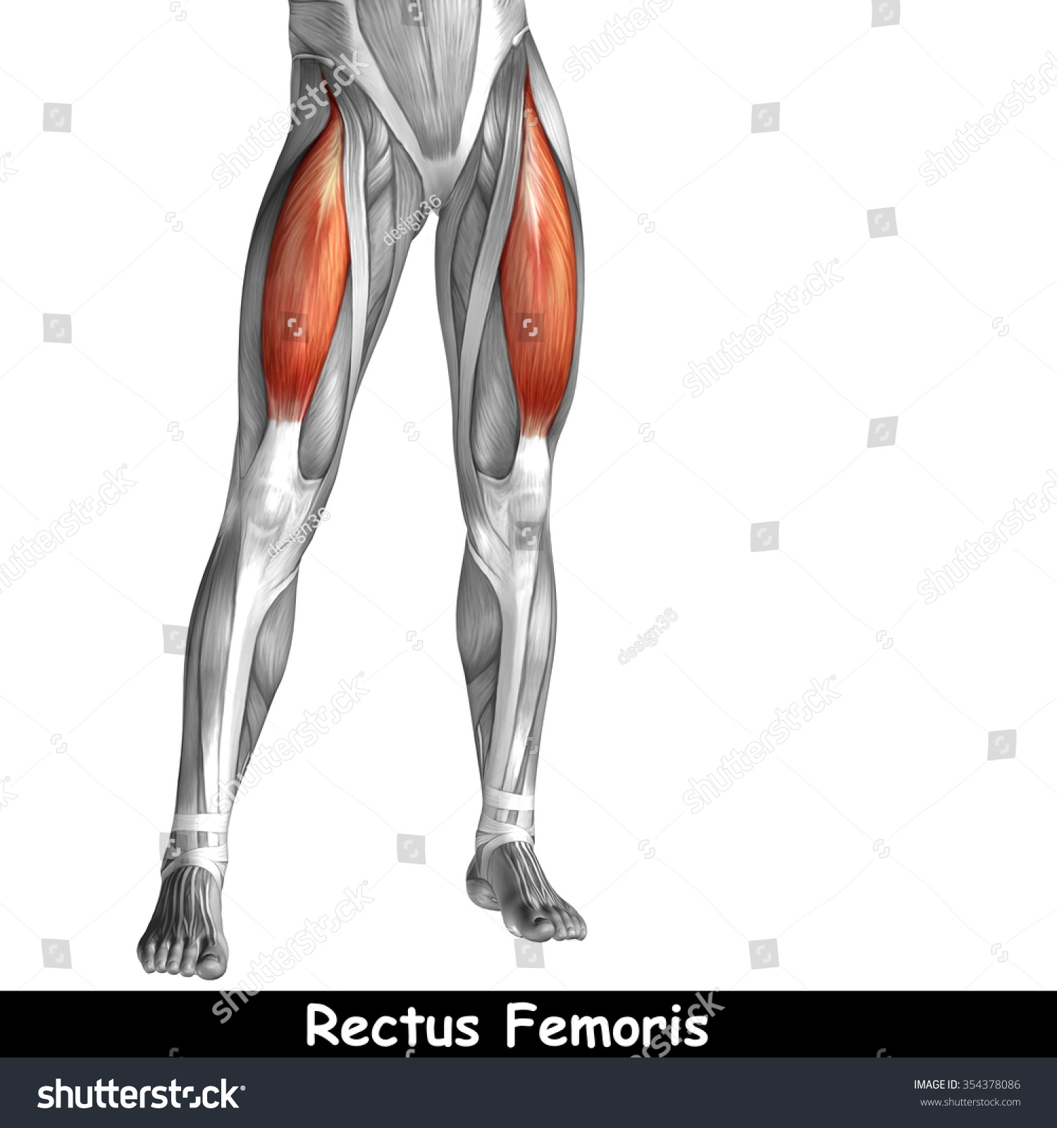 Concept Conceptual 3 D Human Upper Leg Stock Illustration 354378086 ...