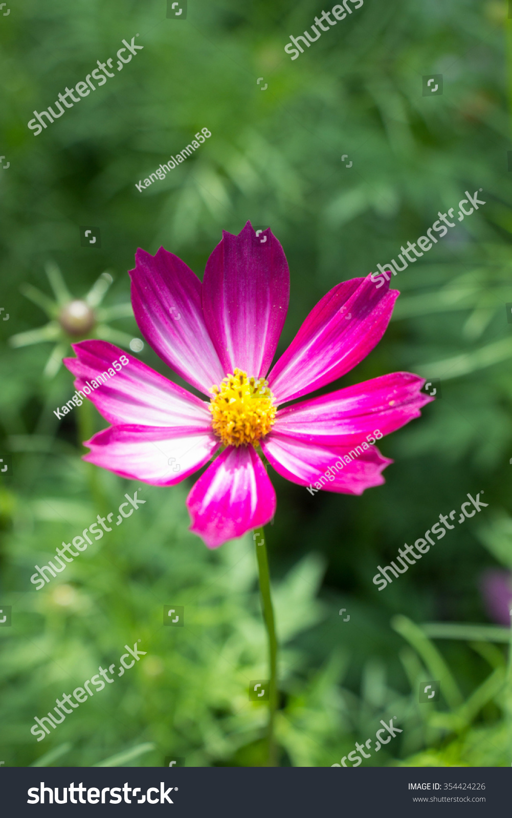 Beautiful winter flowers stock photo edit now 354424226 shutterstock beautiful winter flowers izmirmasajfo