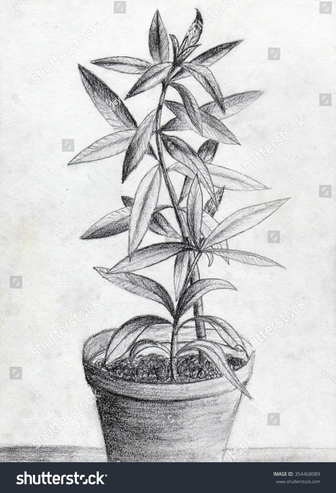 Pencil drawing plant flower pot stock illustration 354468089