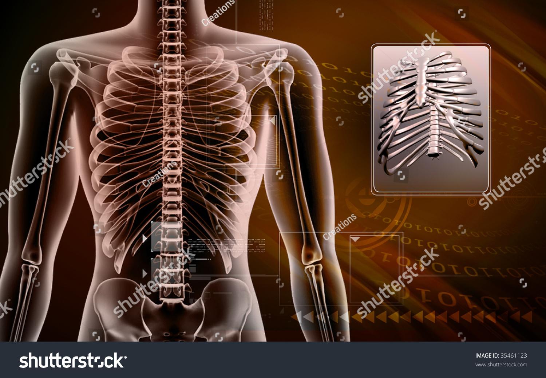 Digital Illustration Human Body Rib Cage Stock Illustration 35461123