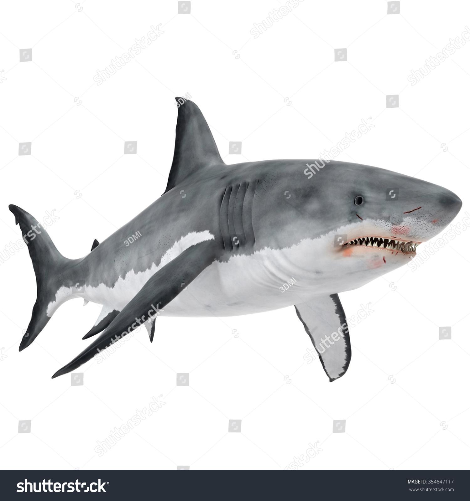 shark fin white background - photo #27
