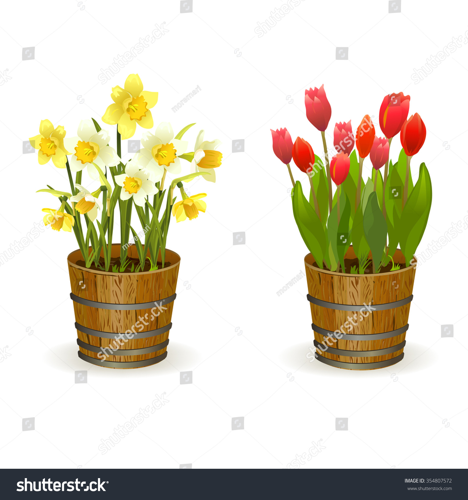 Spring Flowers Daffodils And Tulips Vector Illustration Ez Canvas