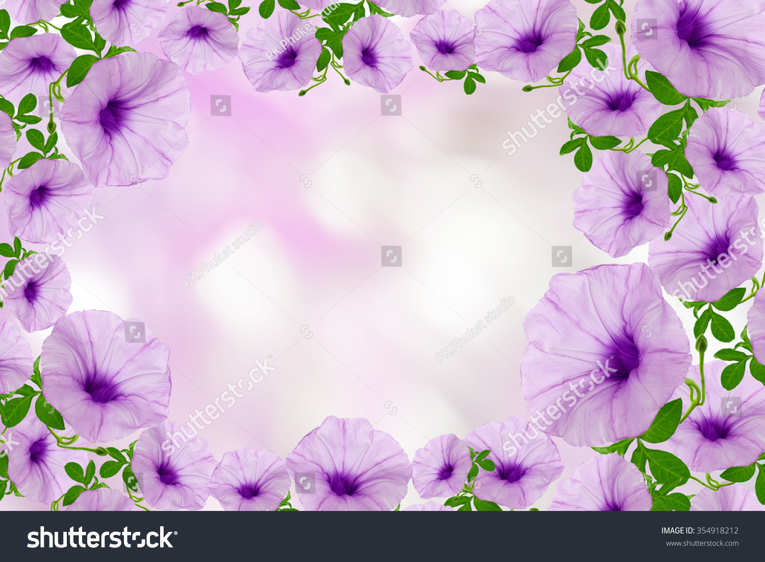 Beautiful Nature Backgrounds Flower Frames Images Free Download