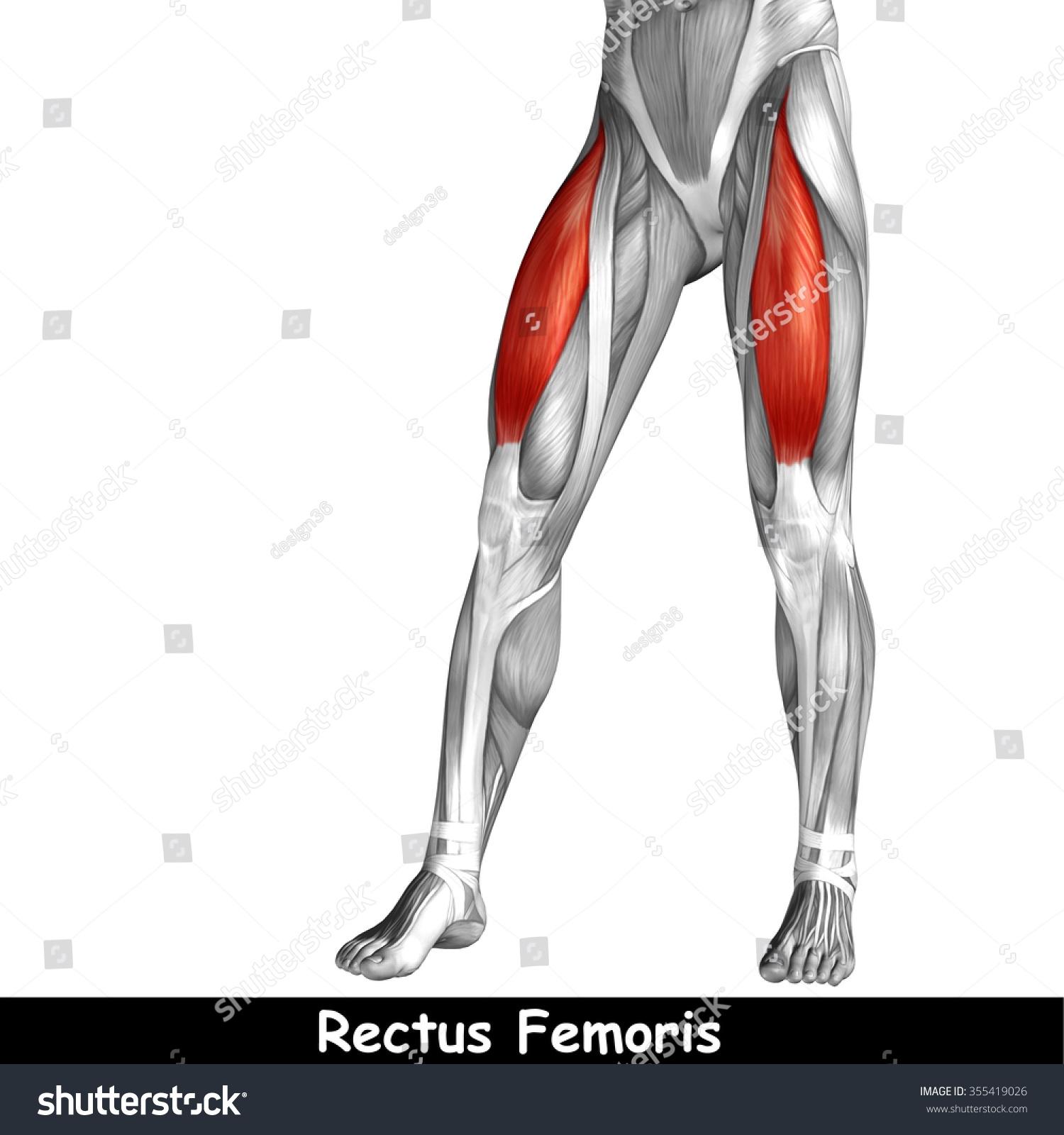 Concept Conceptual 3 D Human Upper Leg Stock Illustration 355419026 ...