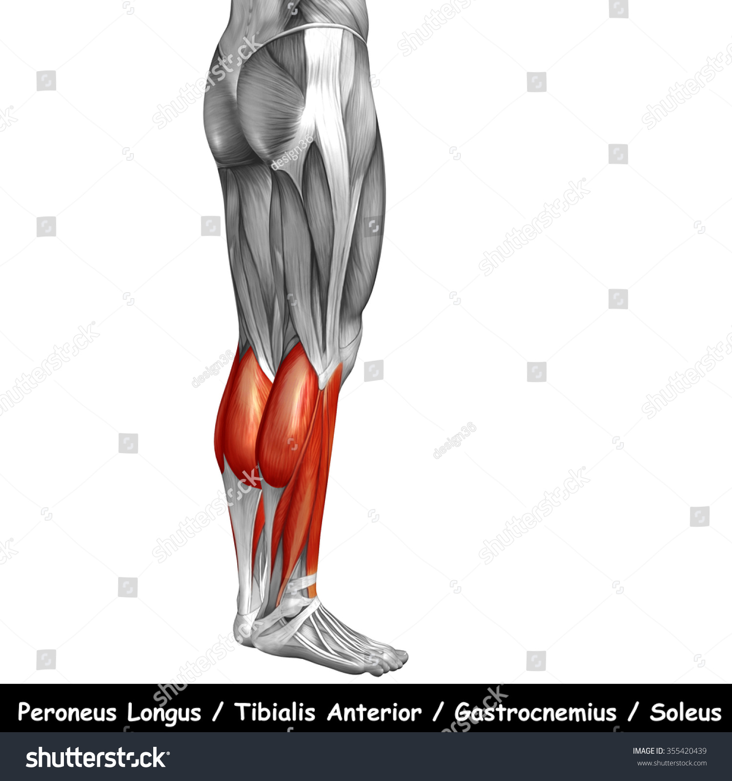 Concept Conceptual 3 D Human Lower Leg Stock Illustration 355420439 ...