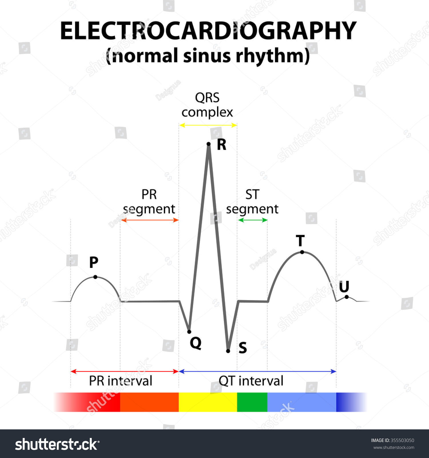 Ecg heart normal sinus rhythm schematic stock vector 2018 ecg of a heart in normal sinus rhythm schematic representation wave and segment names ccuart Choice Image