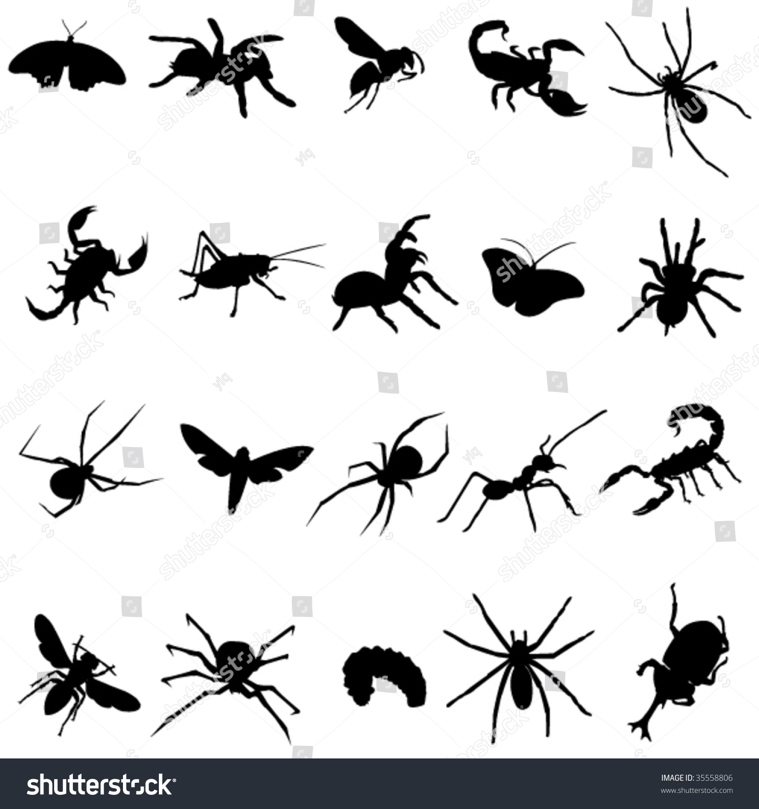 Around World All Types Insects Stock Vector 35558806 - Shutterstock