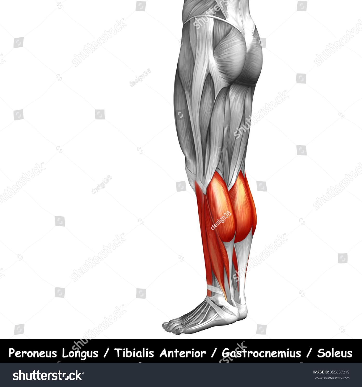 Concept Conceptual 3 D Human Lower Leg Stock Illustration 355637219