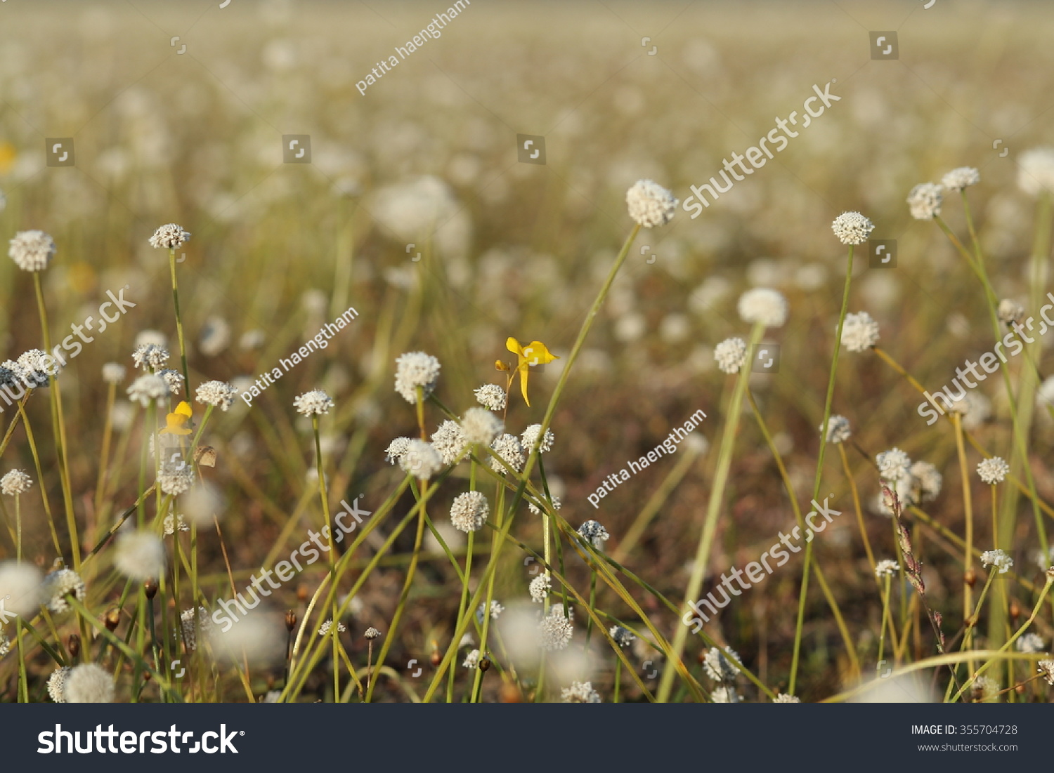 flowers nature background blur floral white vintage garden abstract ...