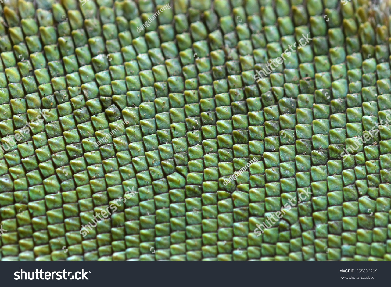 Chameleon Lizard Skin Pattern Textured Green Stock Photo