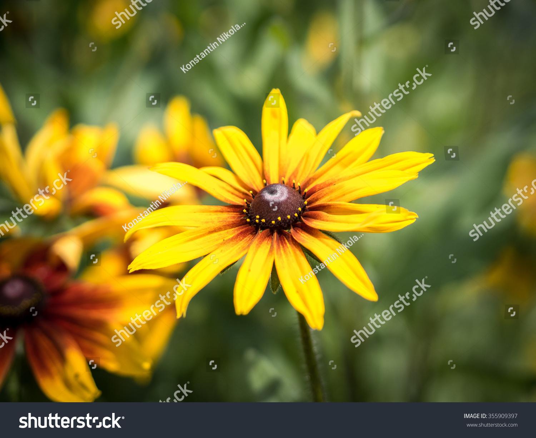 Bright Yellow Cone Flower Rudbeckia Ez Canvas