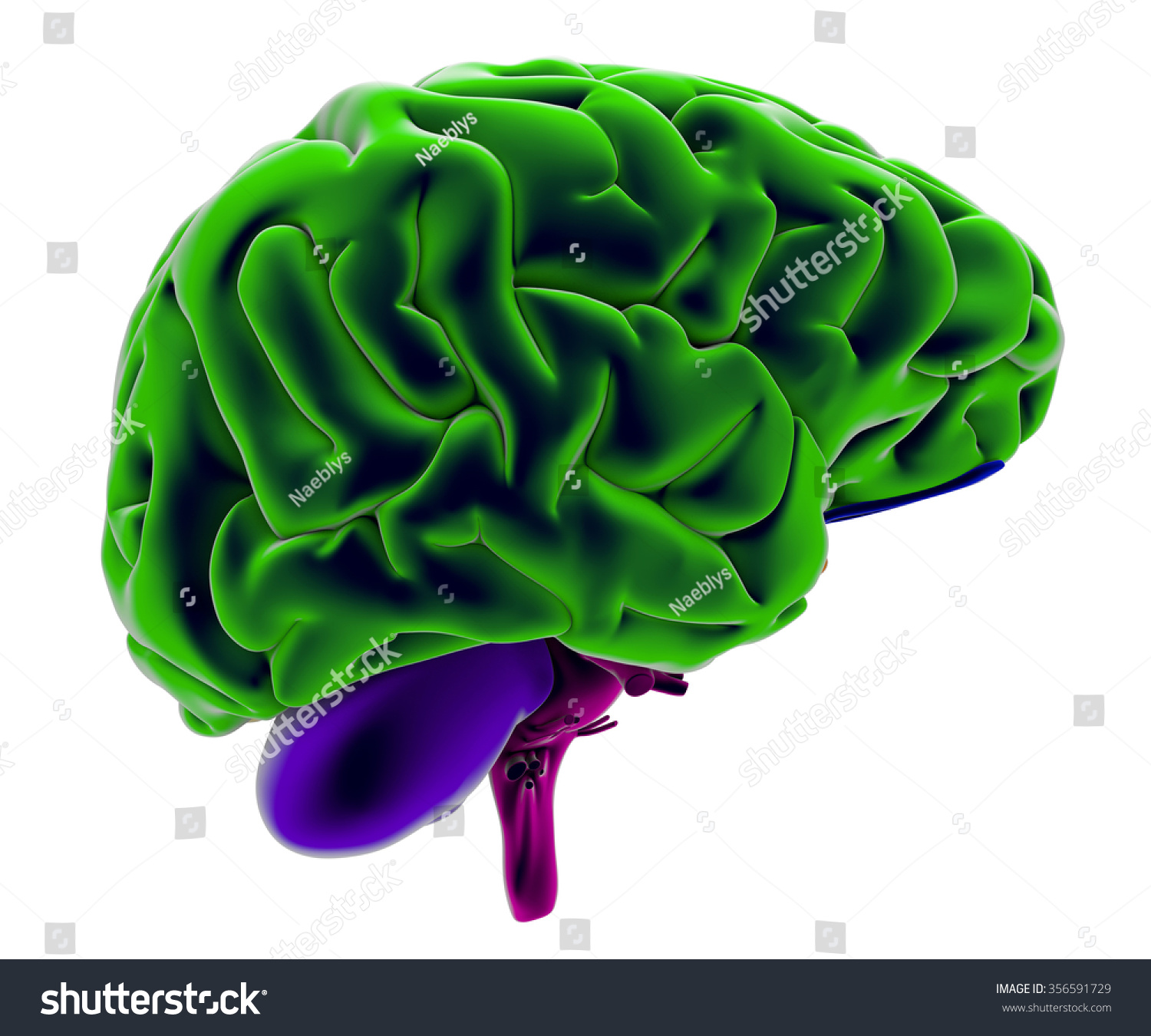 Brain, section, division, cutting parts, anatomy study. Brain seen ...