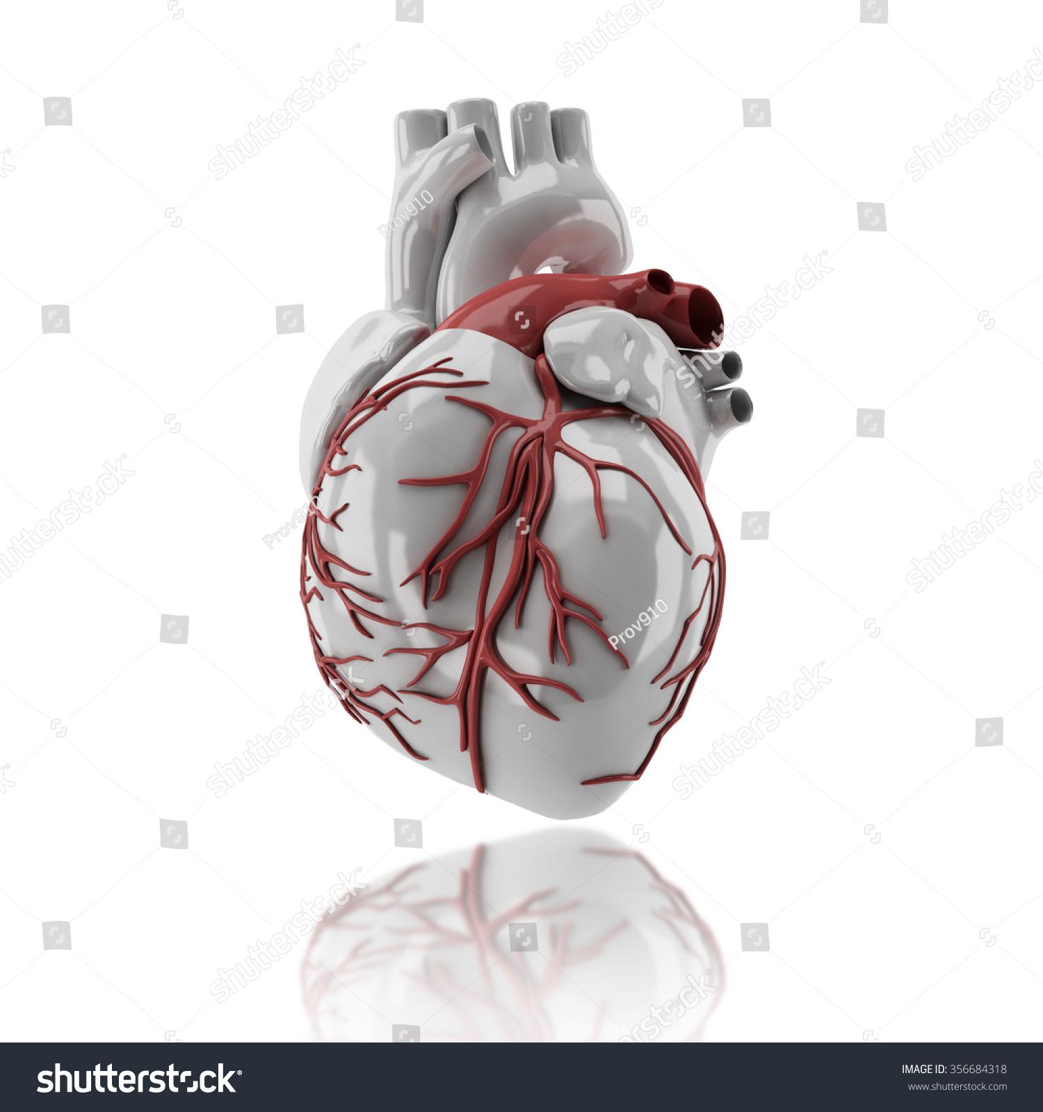 Human Heart Anatomy 3 D Render Image Stock Illustration 356684318 ...
