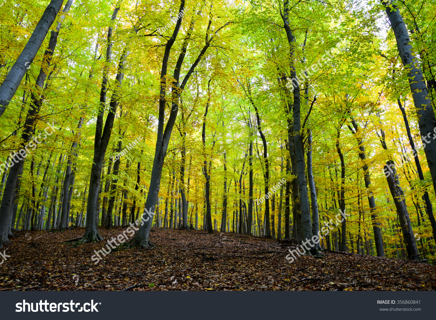 Autumn Autumn Landscape Trees Colorful Mode Stock Photo (Royalty ...