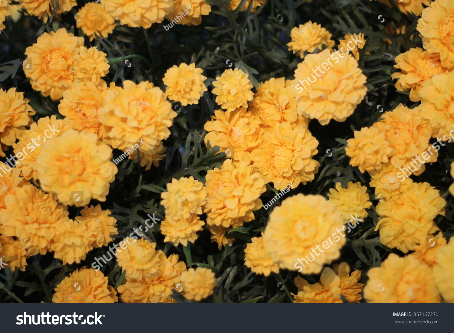Beautiful flowers world stock photo 357167270 shutterstock the beautiful flowers in the world izmirmasajfo