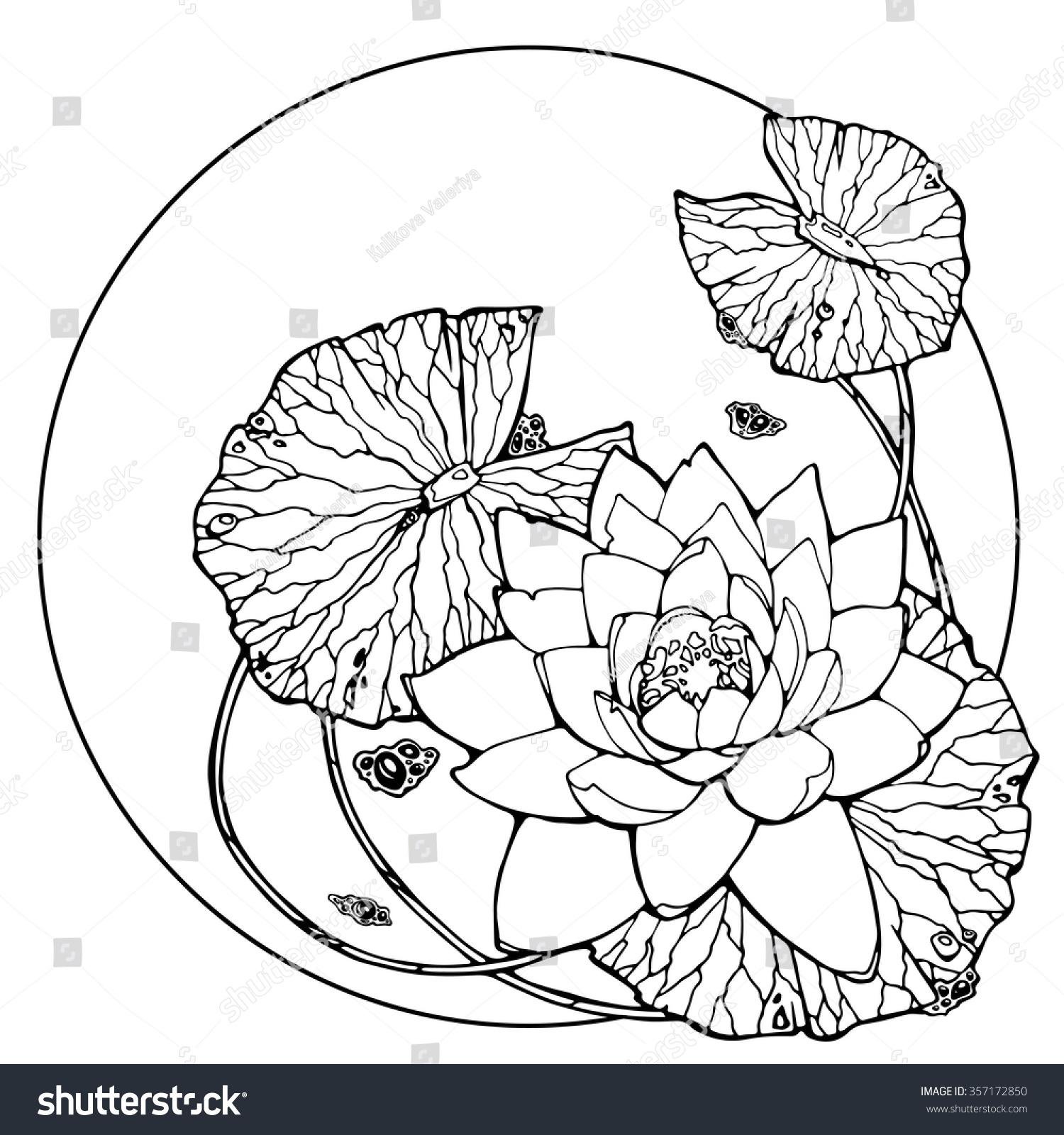 Illustration Water Lily Lotus Feng Shui Stock Vector Royalty Free