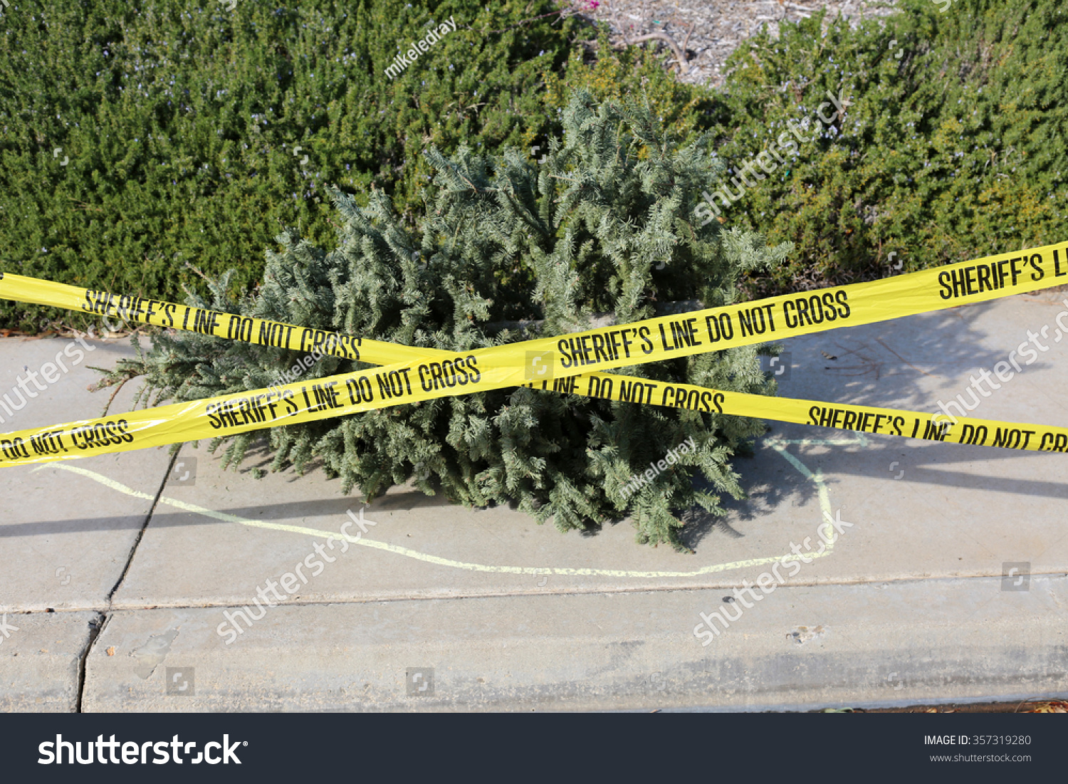 Old Dead Dried Christmas Tree Lays Stock Photo 357319280 ...