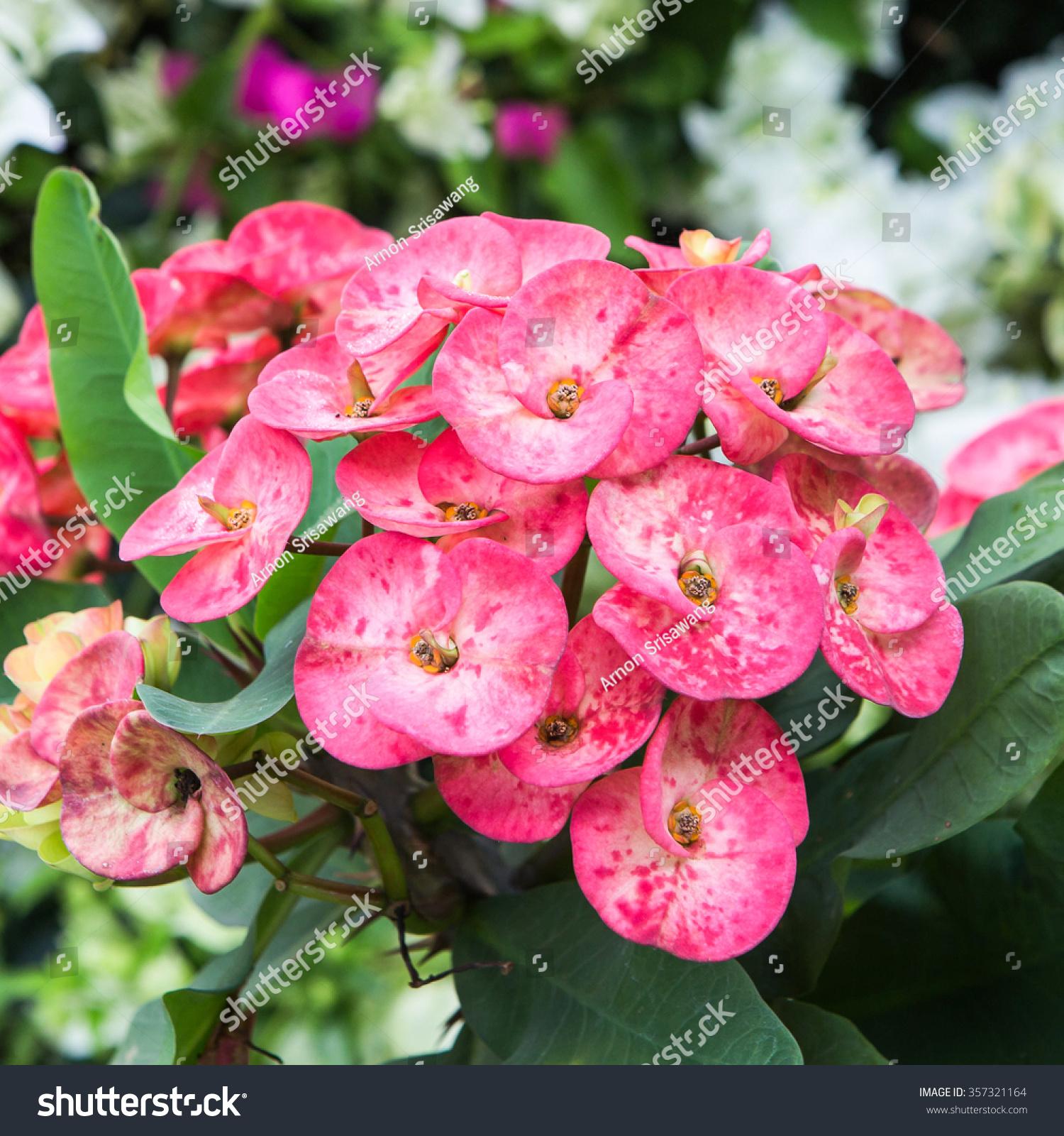 Beautiful Cactus Flower Tropical Flowers Nature Stock Photo Edit