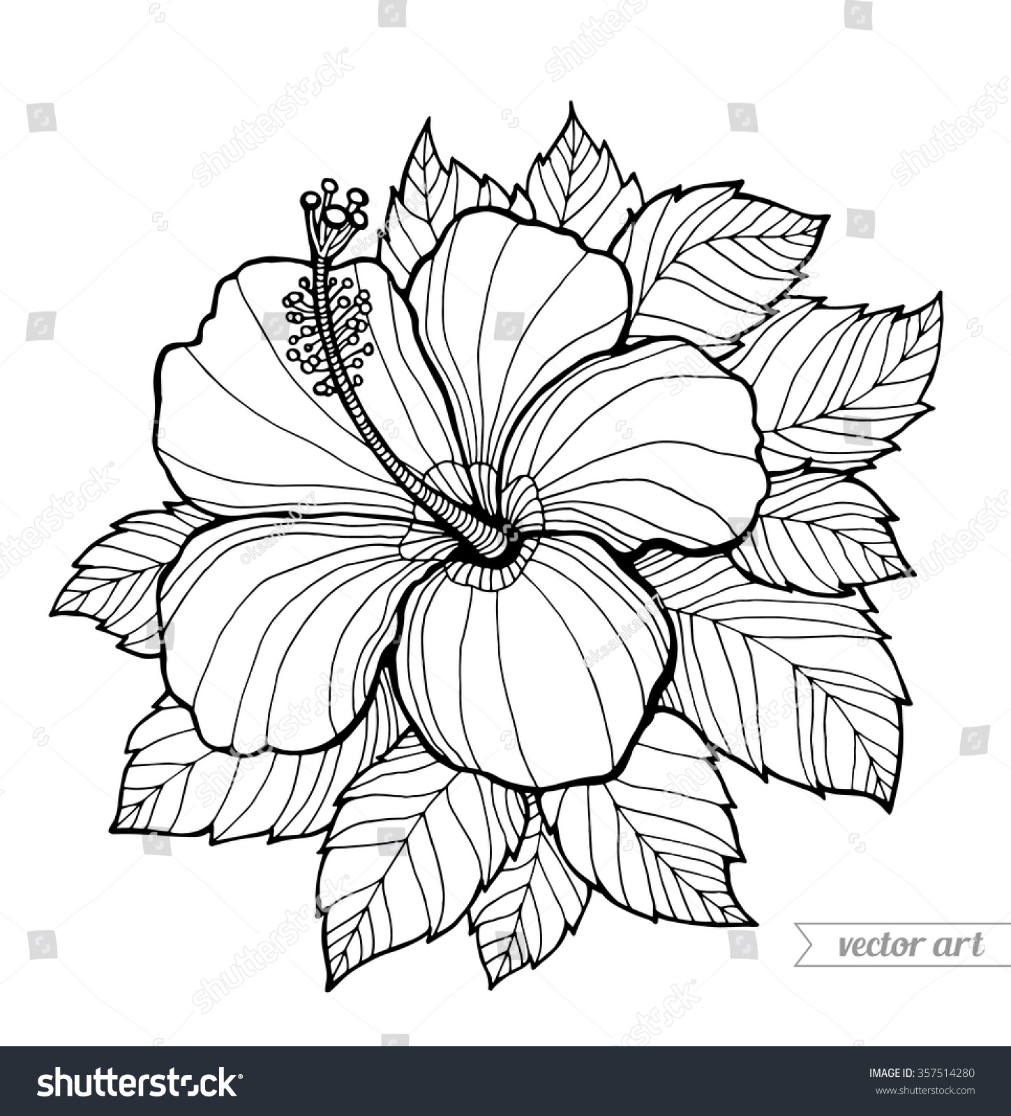 hibiscus coloring pages - hawaii hibiscus flower leaf aloha hawaii stock vector