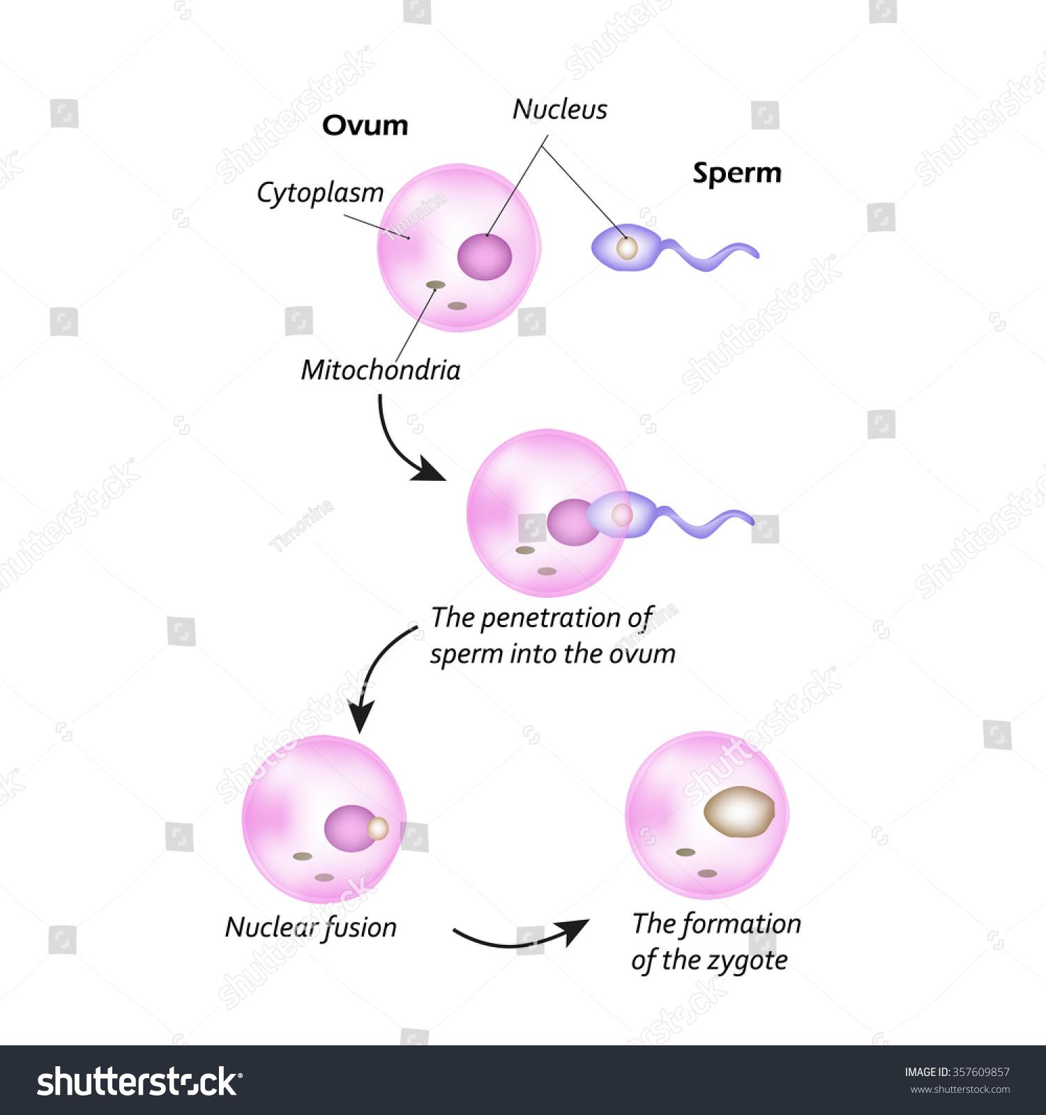 kvindelig sperm pic