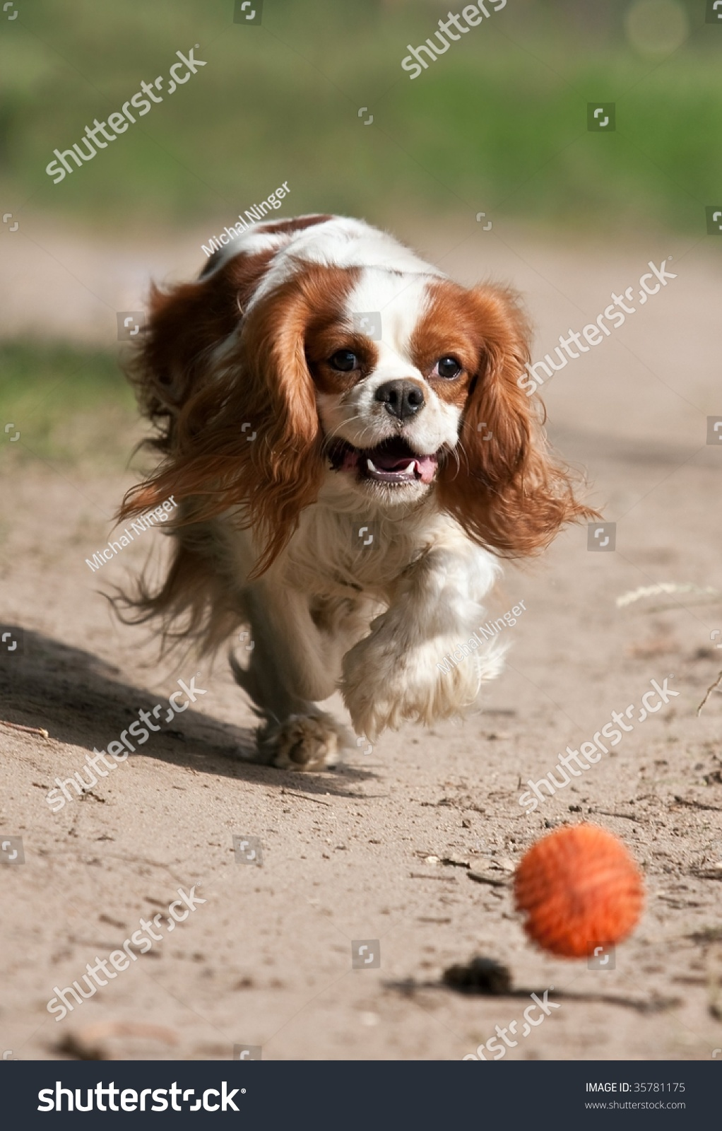 dog catching the ball