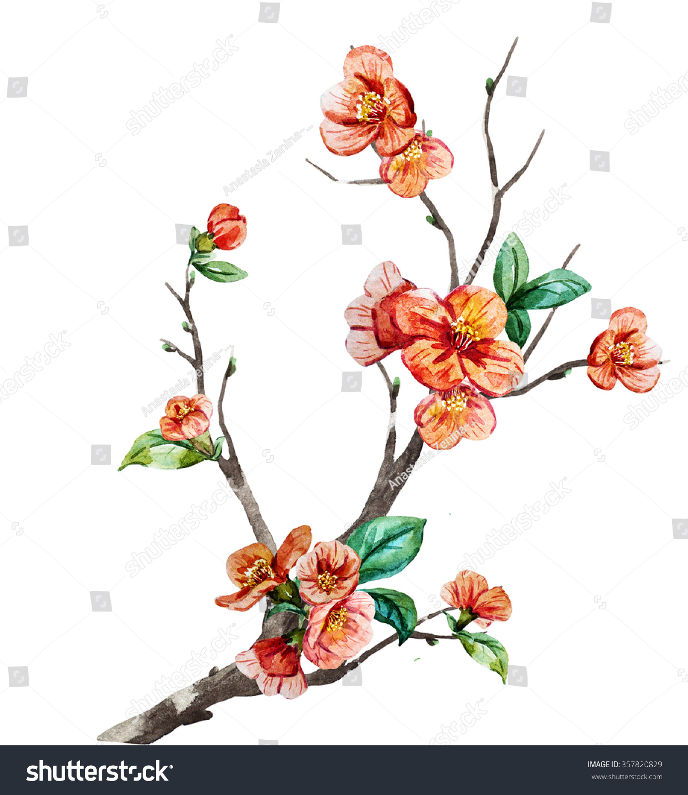 Watercolor branch cherry blossom china chinese new year - Flowers for chinese new year ...