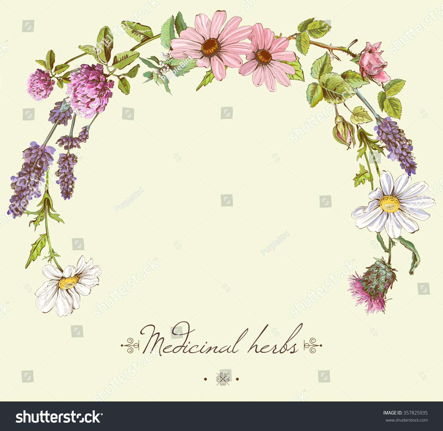 Vector Vintage Hand Drawn Frame With Wild Flowers And