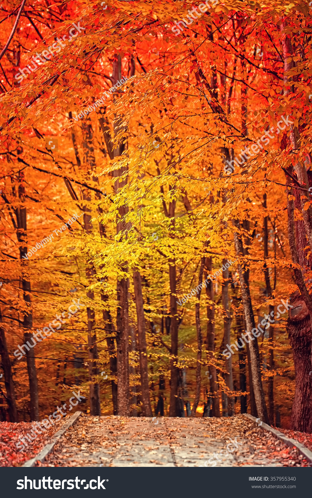 awesome bright autumn scenery - photo #42