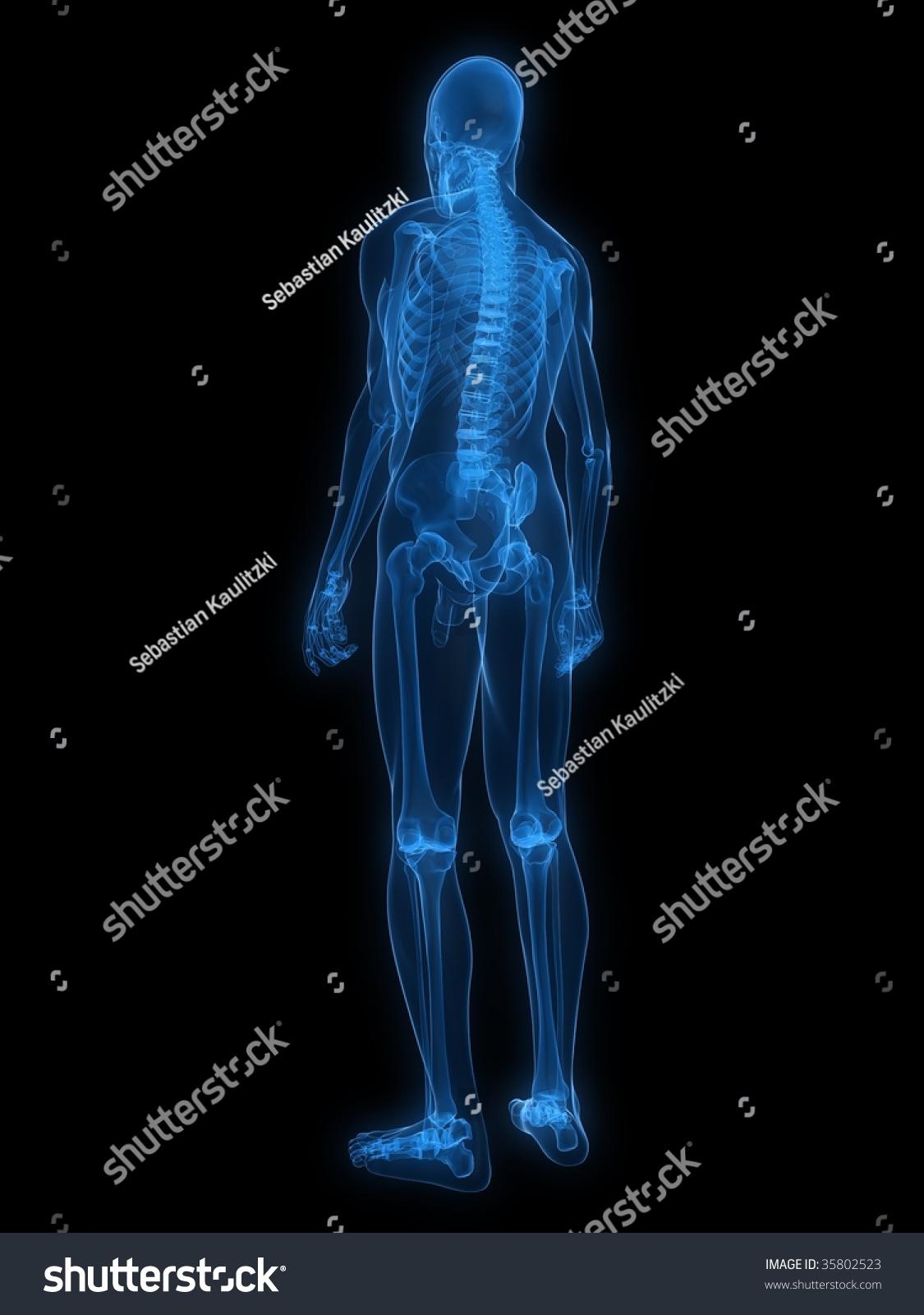 Xray Skeleton Xray Human Skeleton St...