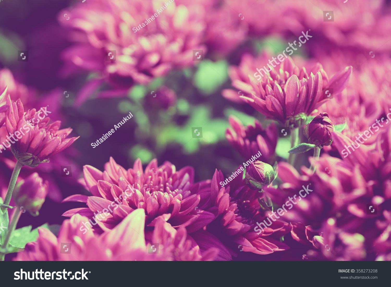 Close Light Purple Flowers Background Stock Photo Edit Now