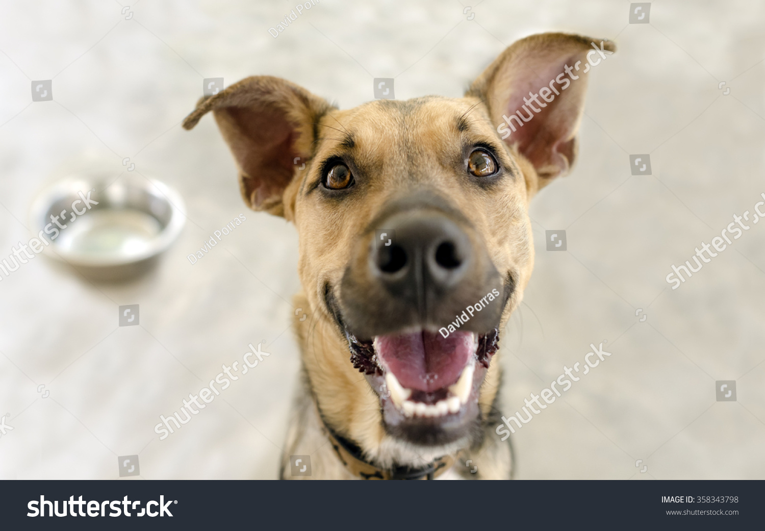 Happy Dog Bowl Very Happy Hungry Stock Photo 358343798 ... - photo#48