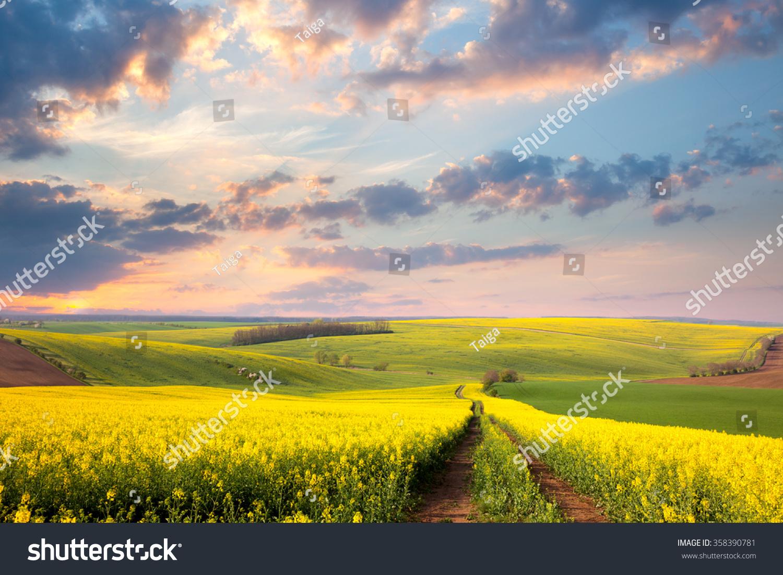 beautiful yellow field landscape - photo #29