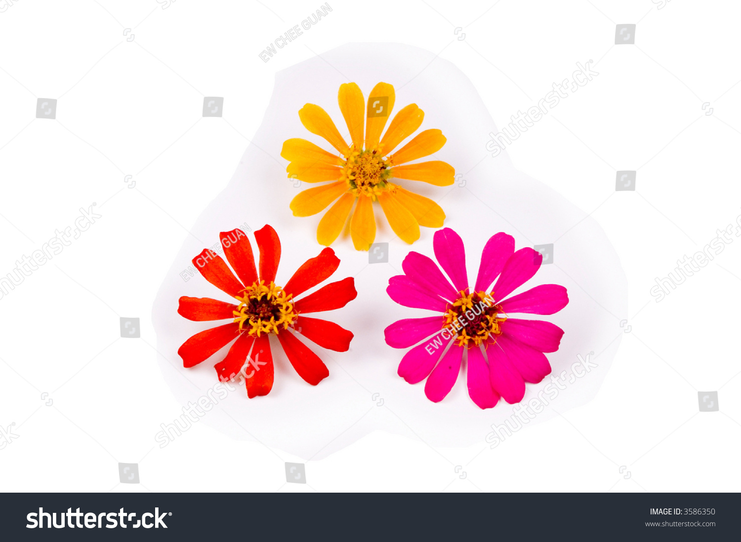 Three Different Kinds Flower White Back Stock Photo Edit Now
