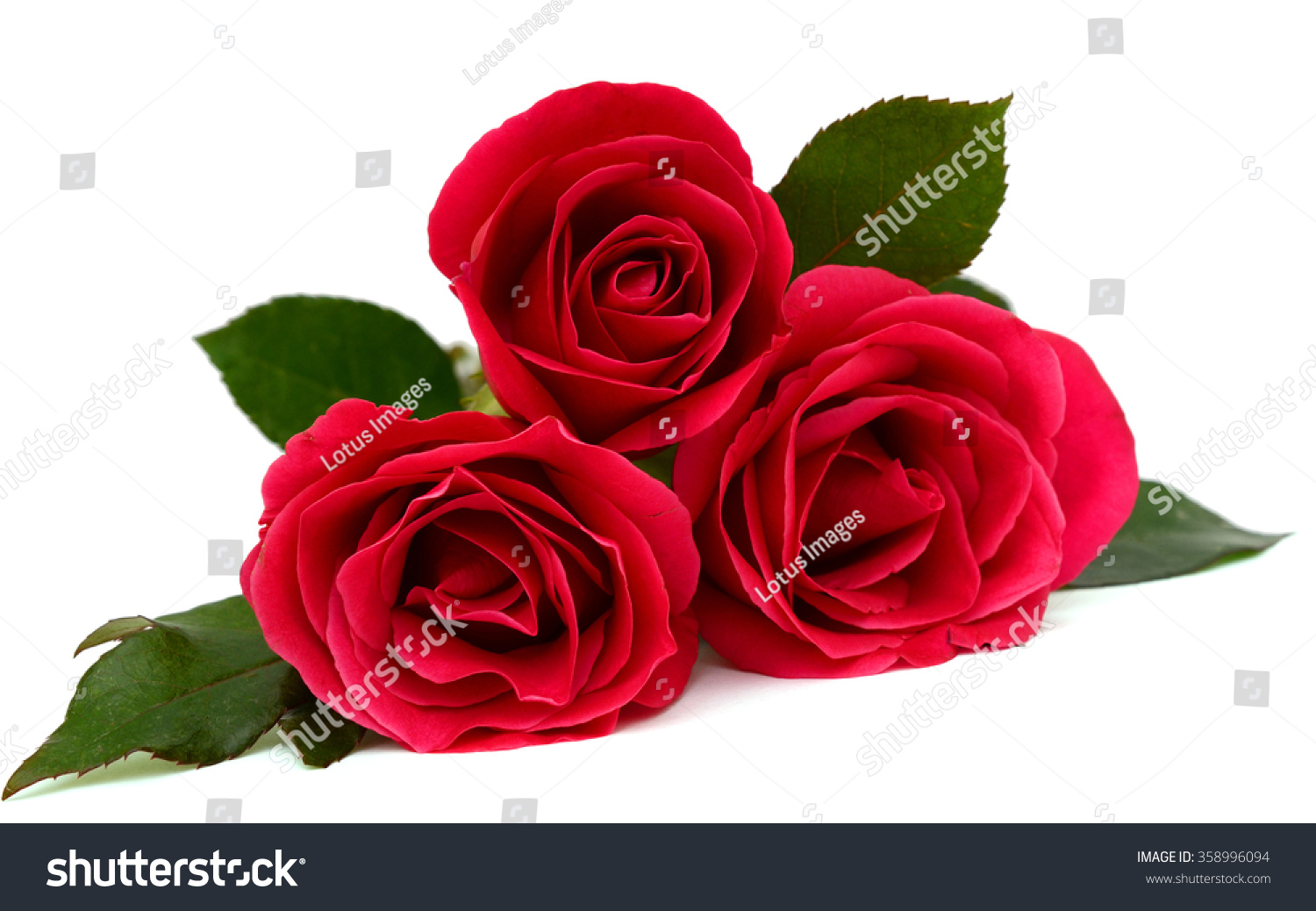 Red Rose Flower Isolated On White Background Ez Canvas