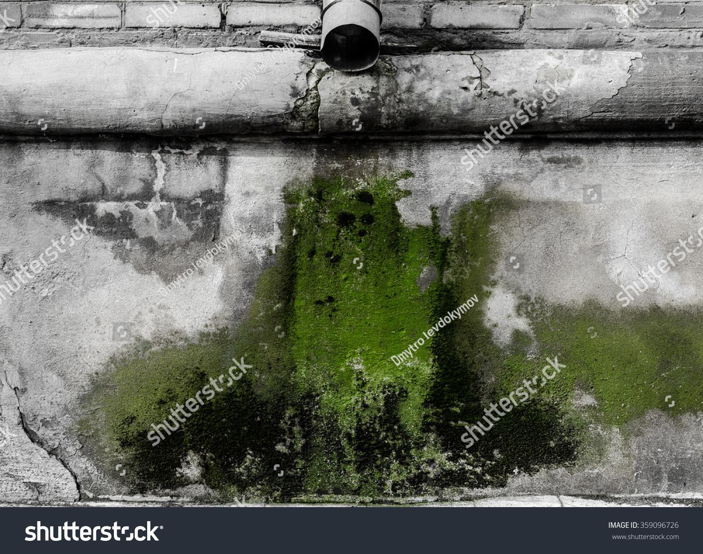 Drain Mold Stock Photo (Edit Now) 359096726
