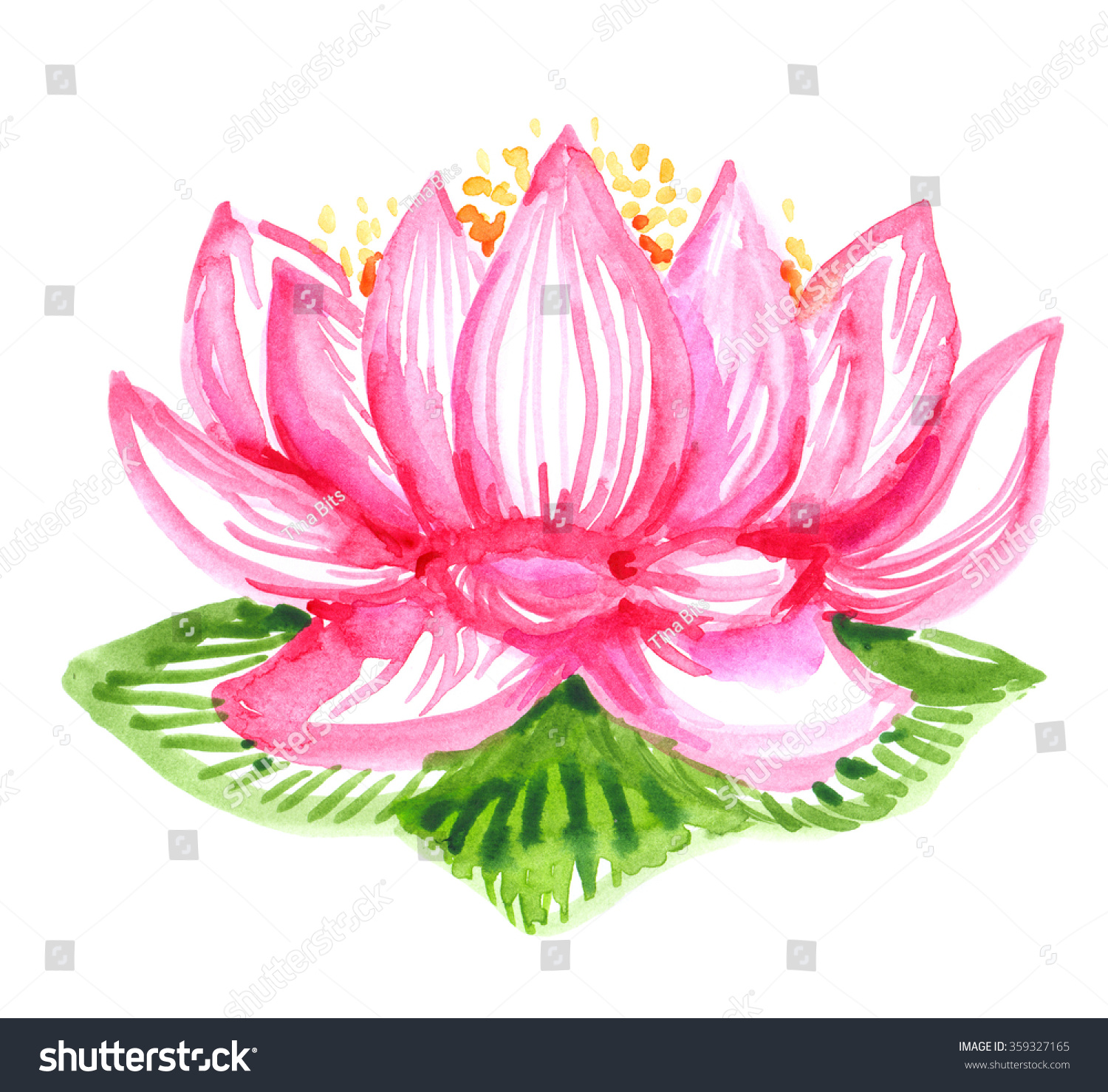 Pink Lotus Flower Painted Watercolor On Stock Illustration 359327165