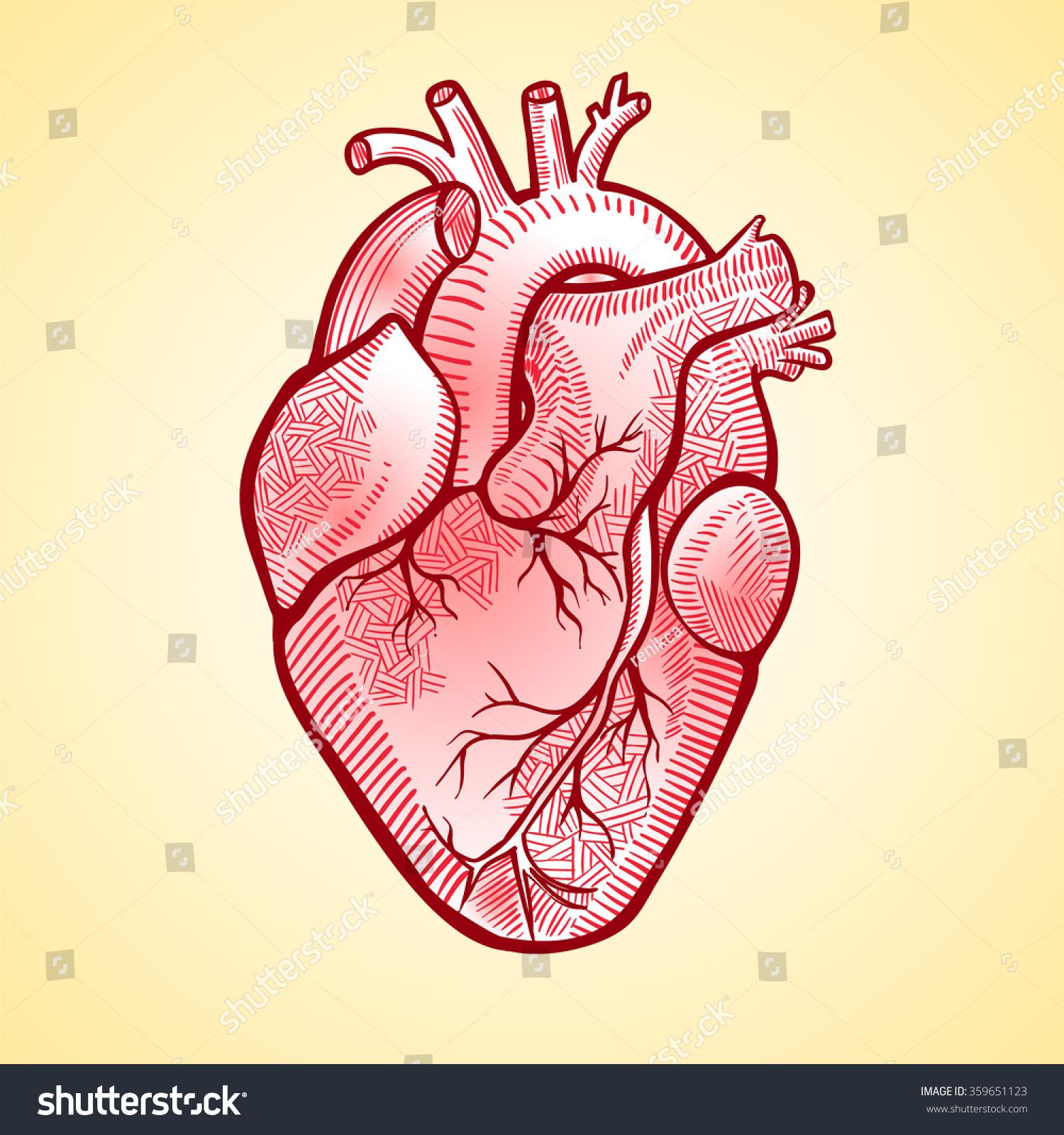 Human Anatomical Heart Made Graphic Art Stock Vector Royalty Free