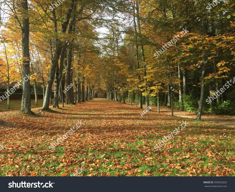 Autumn in forest gardens San Ildefonso, Spain | EZ Canvas
