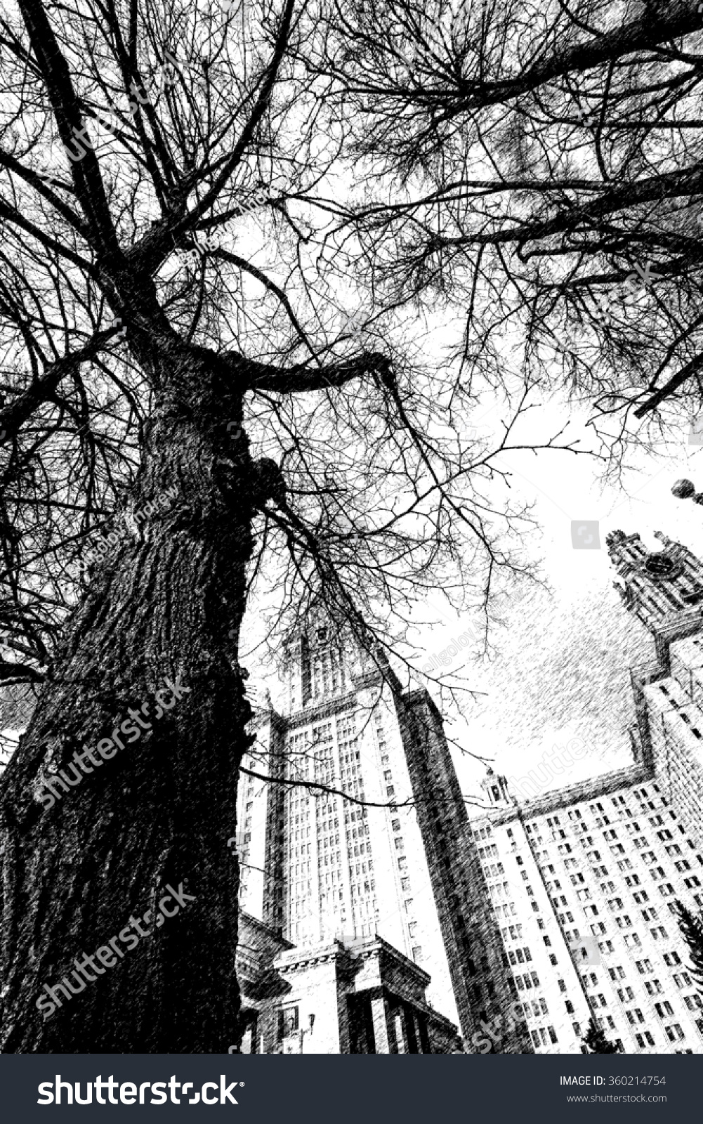 Graphic pencil sketch of wide angle view of tree branches near main building of moscow university
