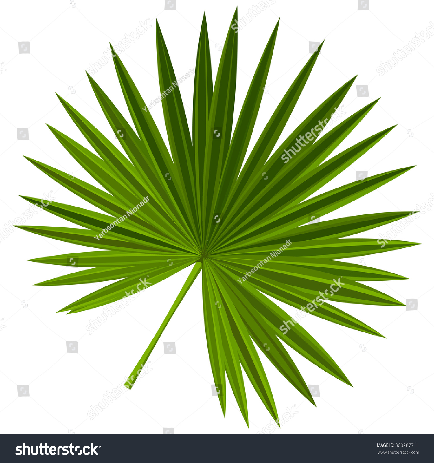palm leaves cartoon stock vector 360287711 shutterstock
