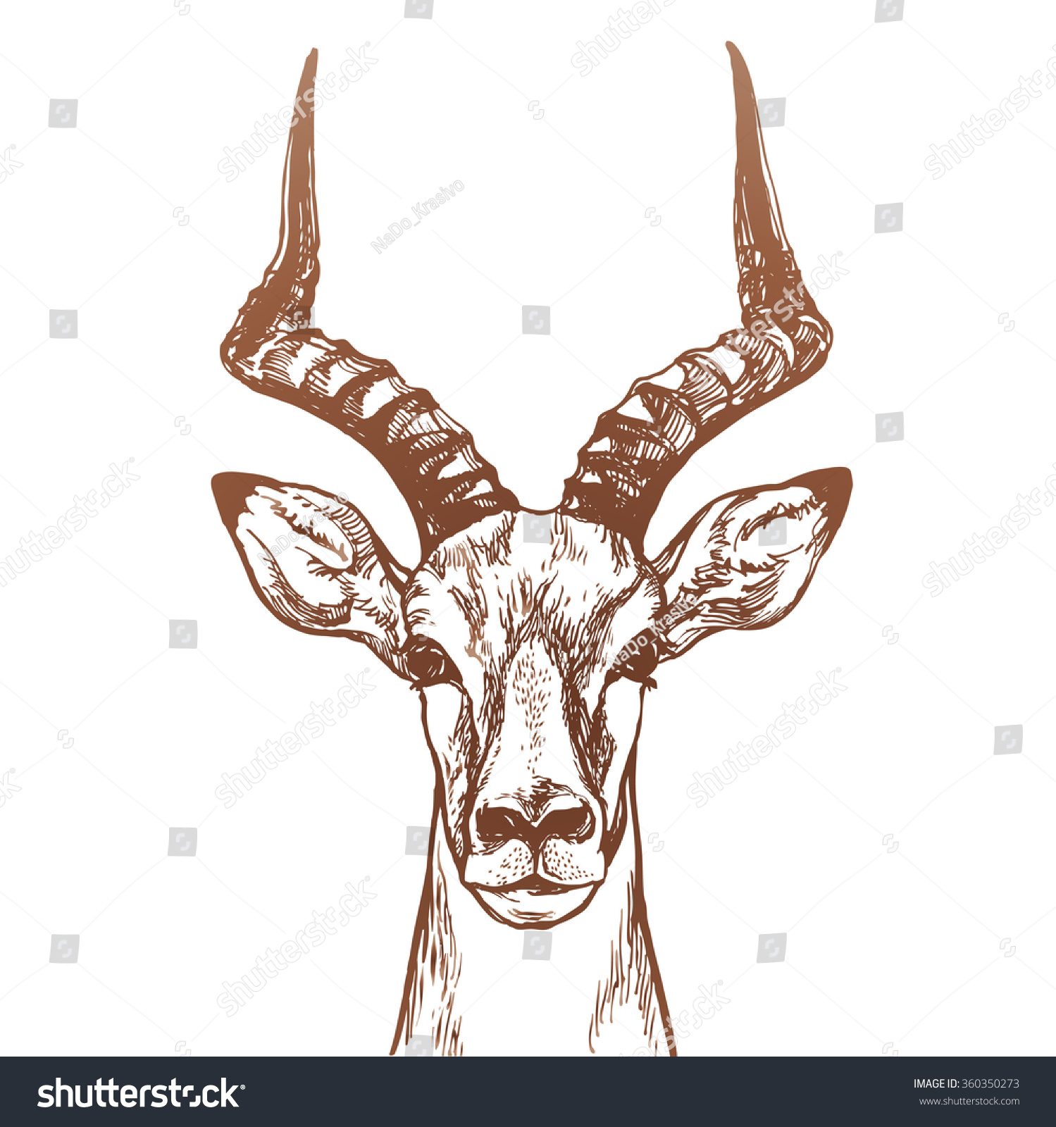 Gazelle head drawing - photo#13
