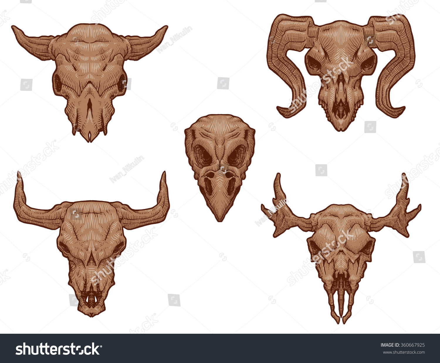 vector set images drawing light brown stock vector 360667925