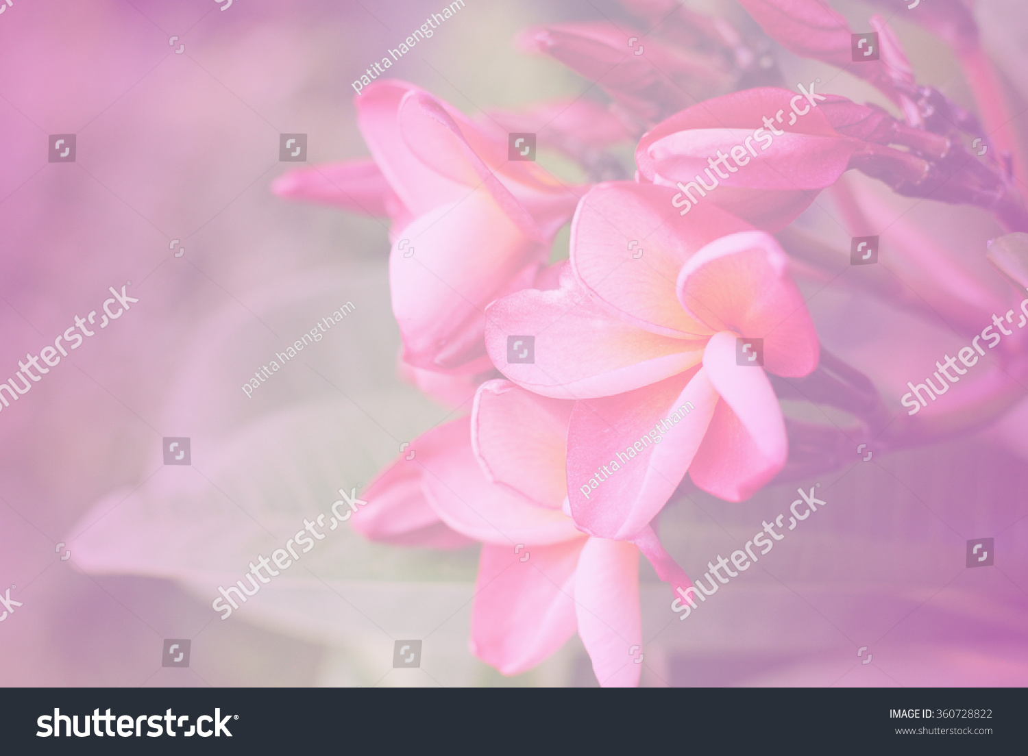 Vintage Flowers Color Background Nature Art Pink Retro Abstract
