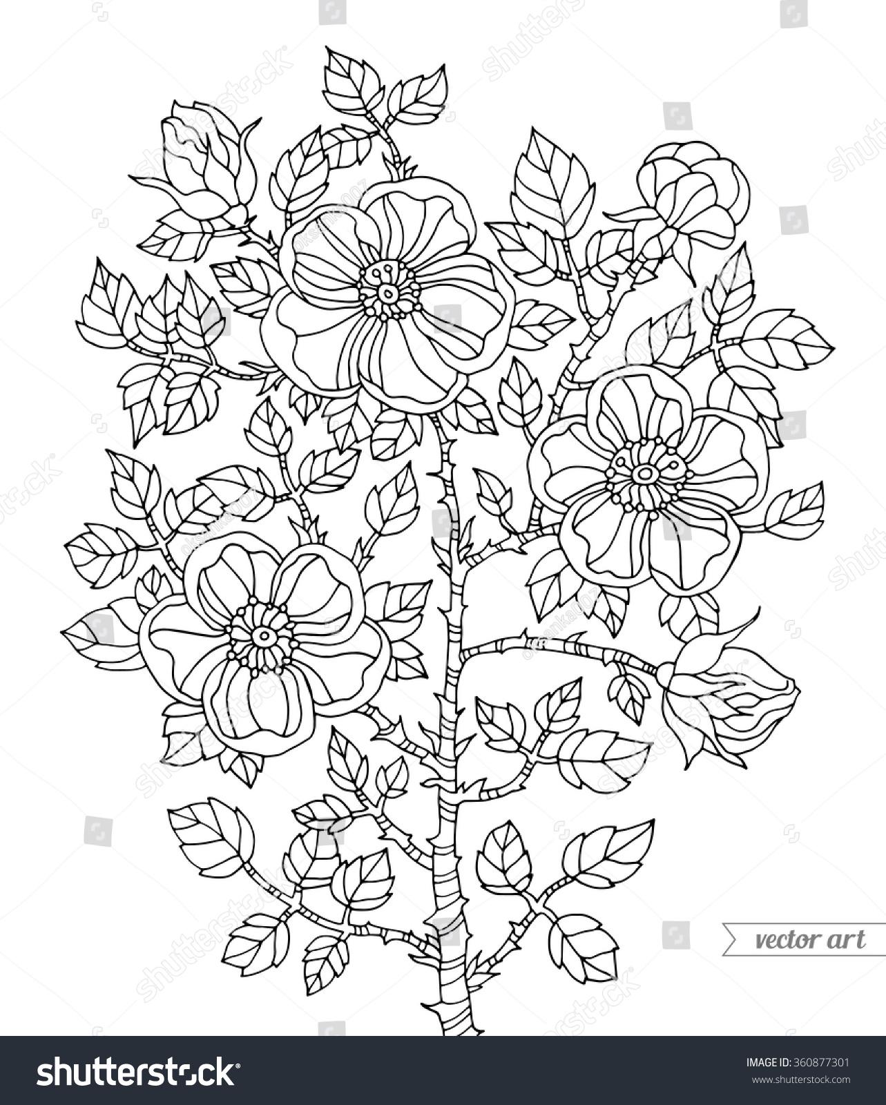 Botanical art coloring book - Botanical Art Coloring Book Coloring Book Page For Adult Botanical Vector Zentangle