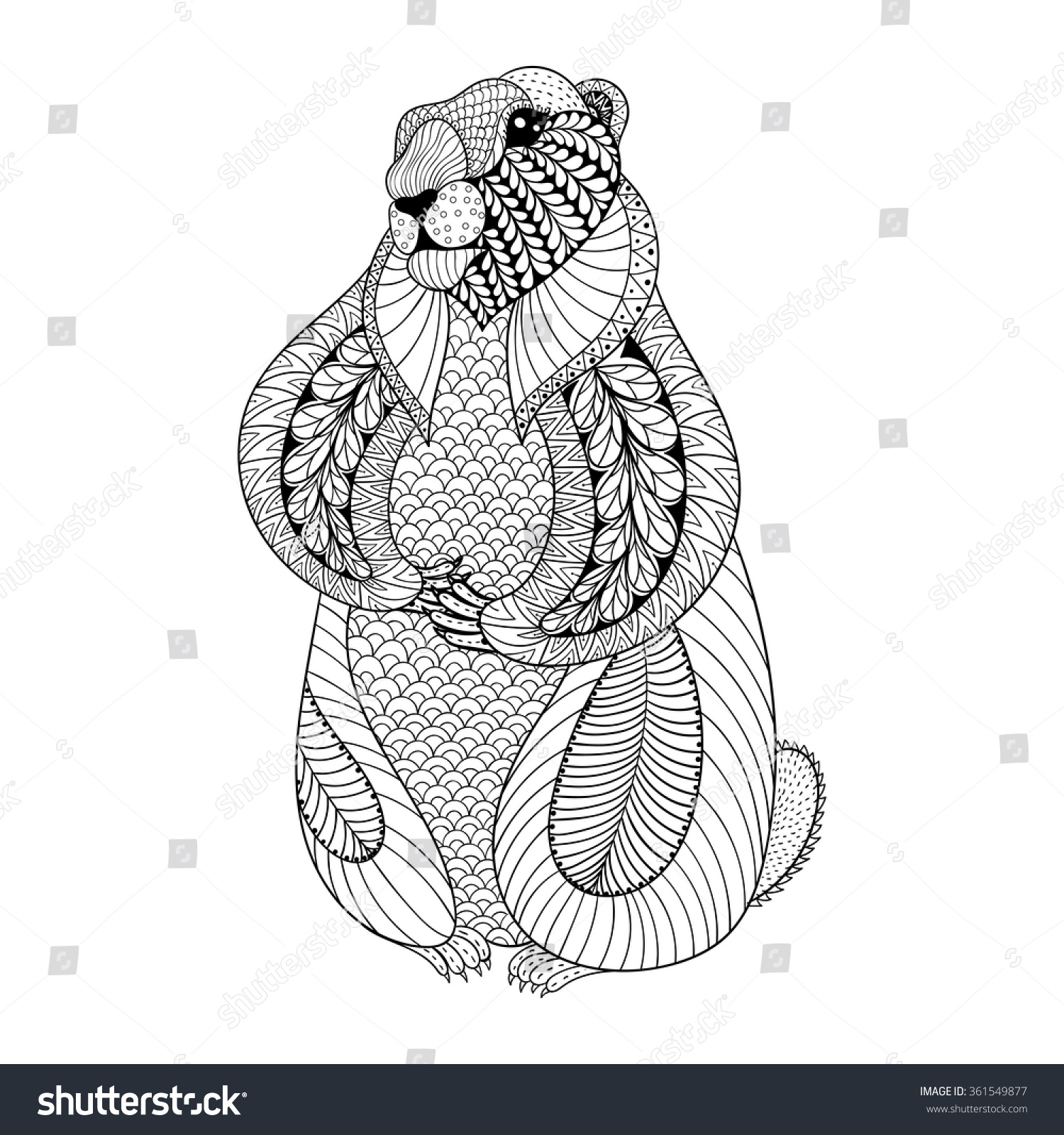 Hand Drawn Groundhog Adult Coloring Pages Stock Vector