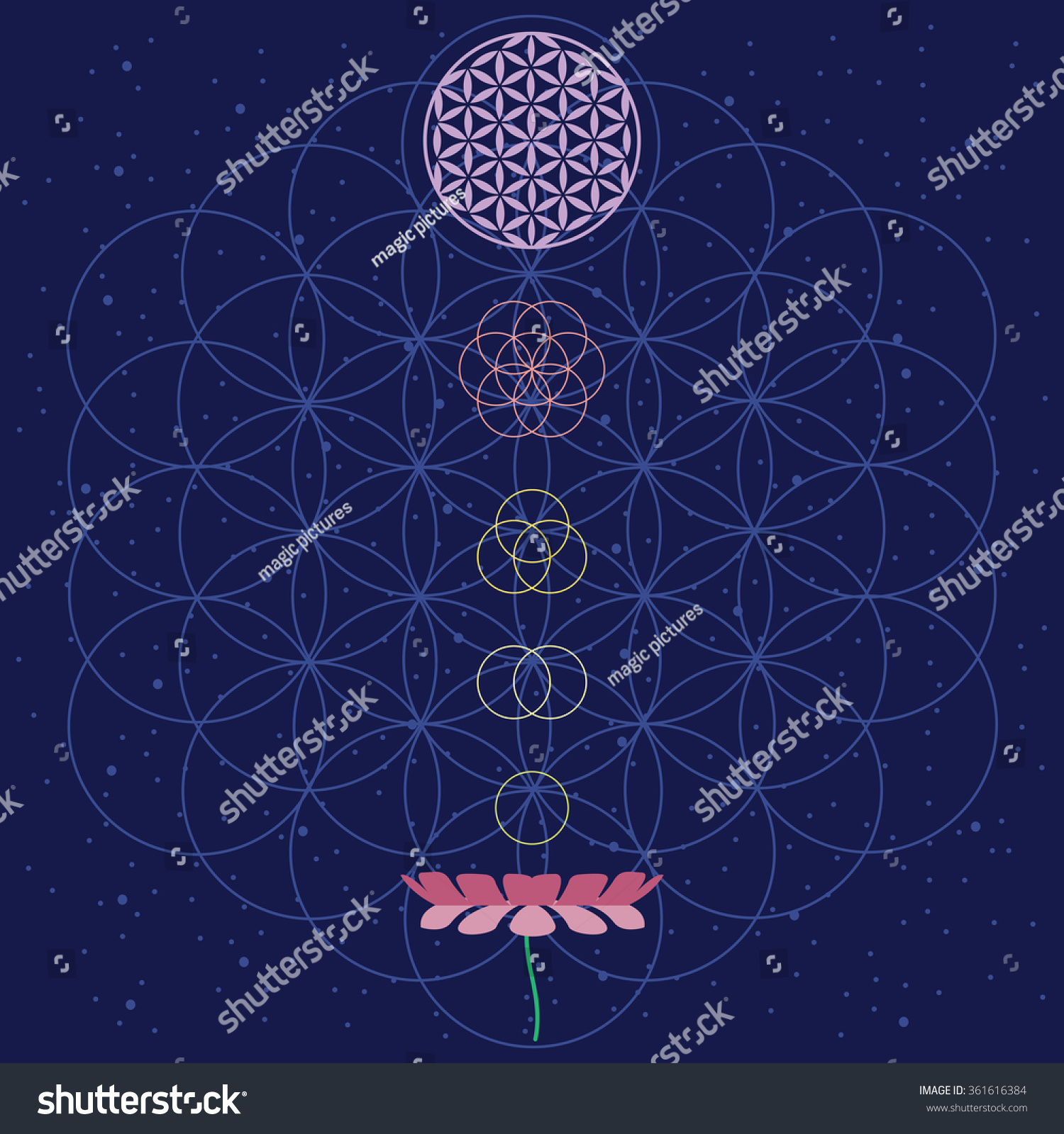 Vector Illustration Flower Life Lotus Cosmos Stock Vector Royalty