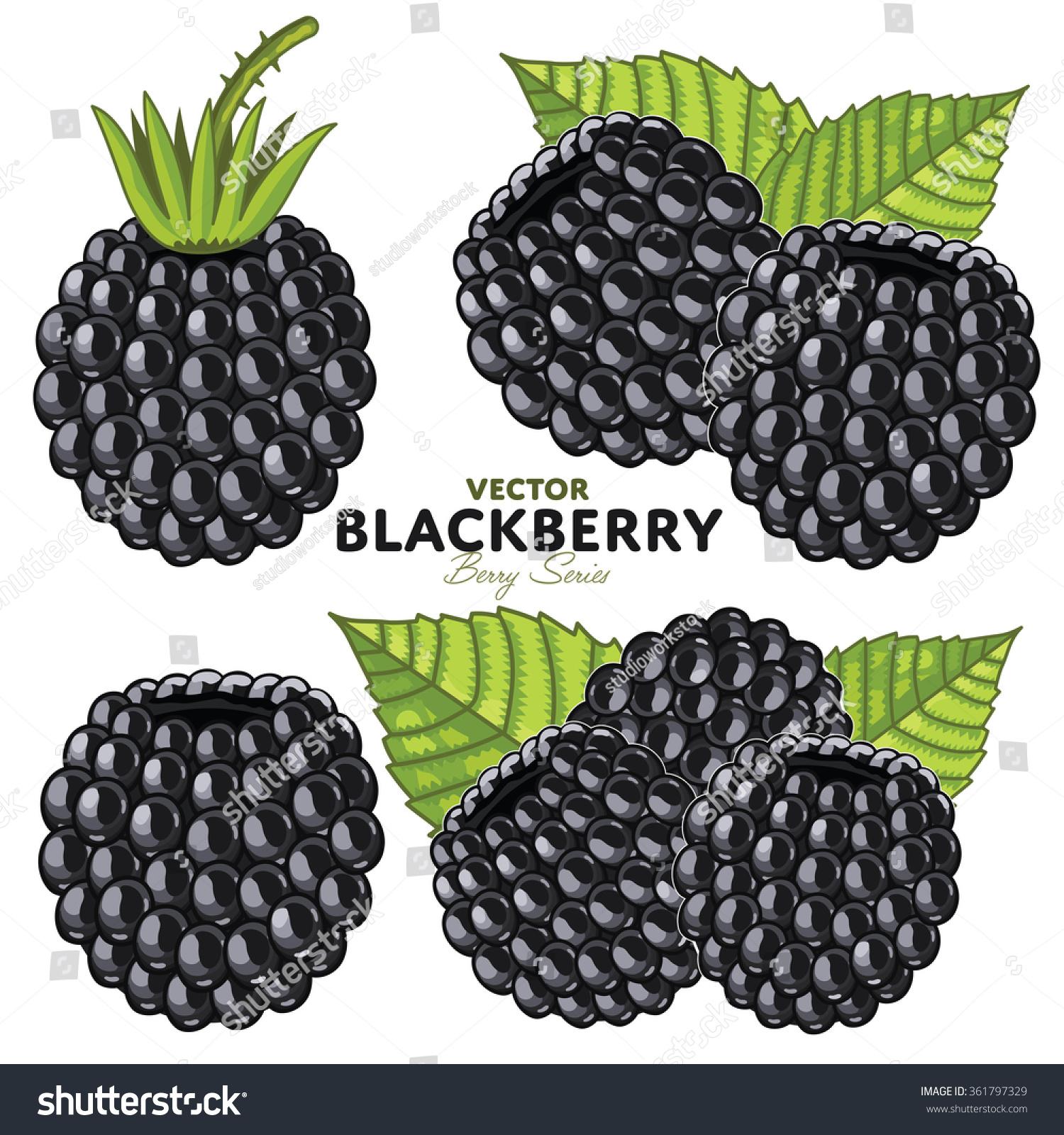blackberry composition blackberry leaves blackberry