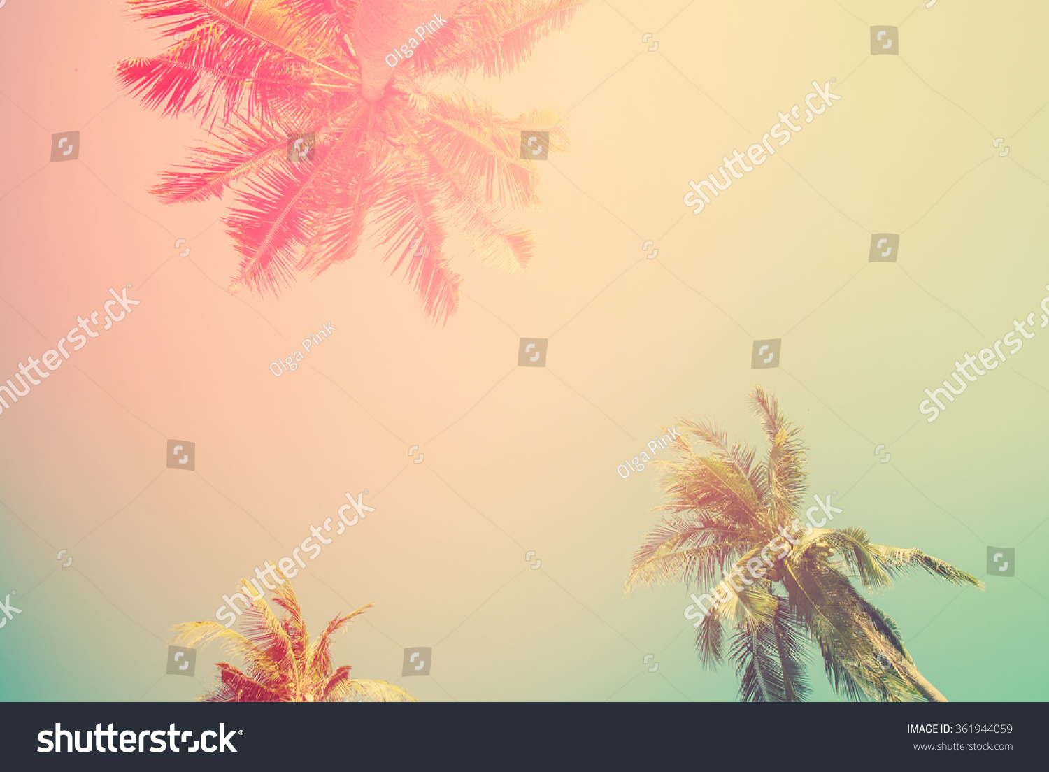 Tropical Background Palm Trees Sun Light Stock Photo