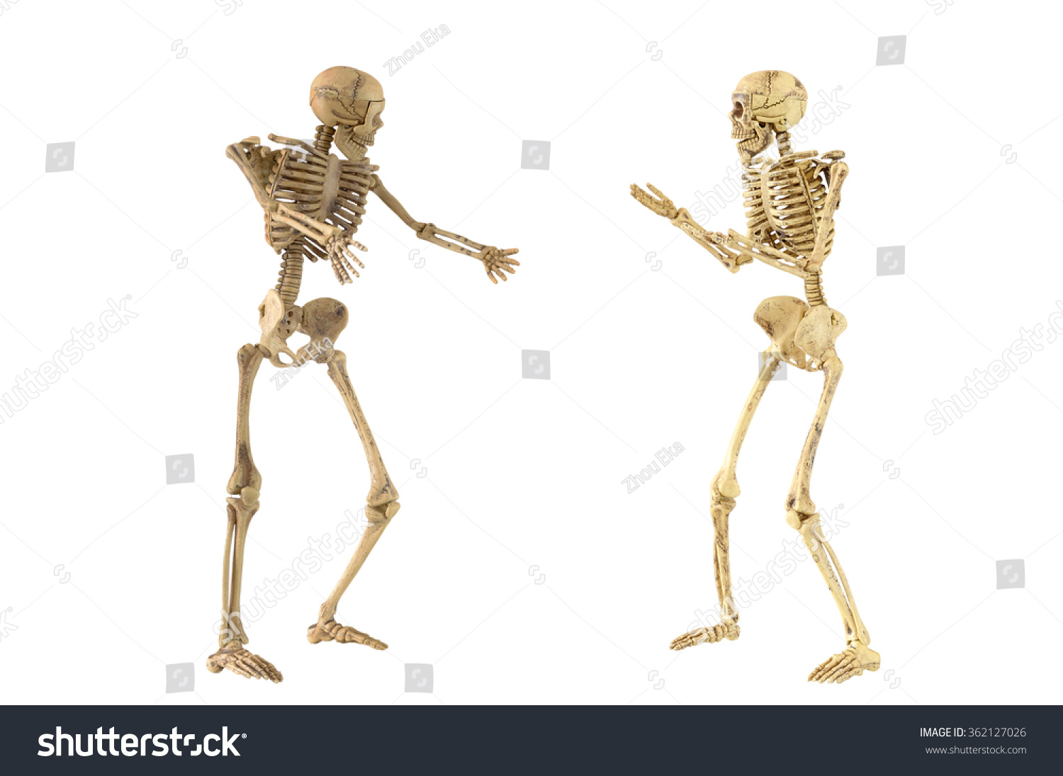 Human Skeleton Bones Standing Action Conversation Stock Photo Edit
